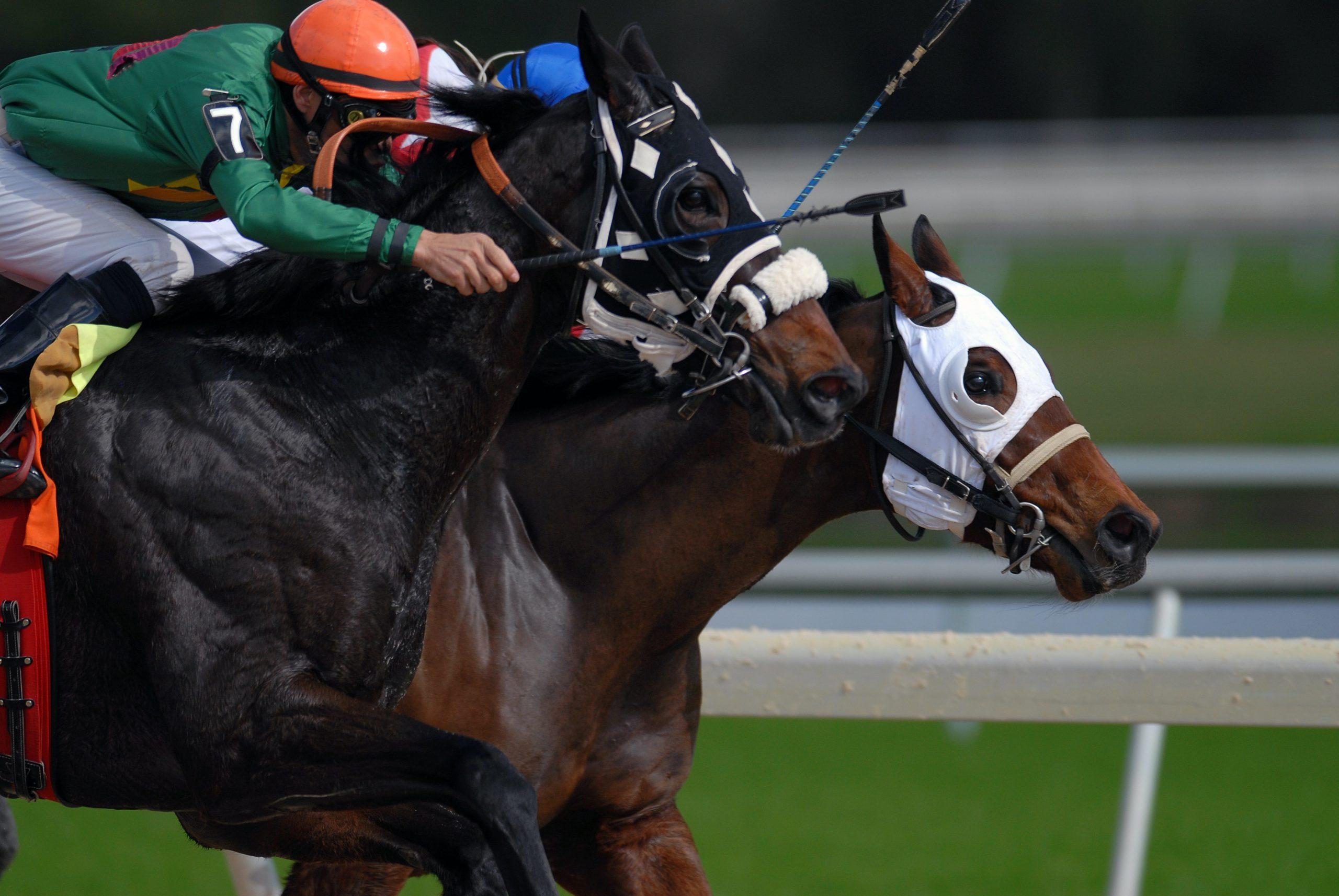 competencia de caballos