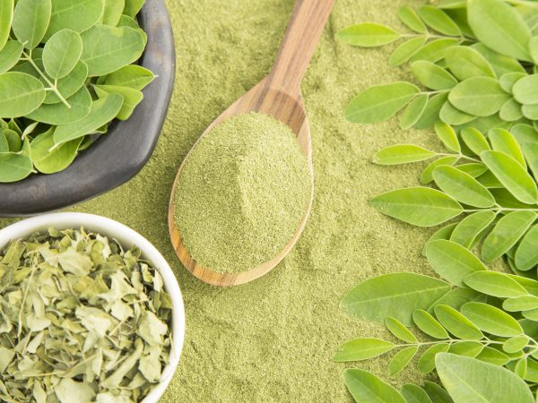 Moringa nutritional plant – Moringa oleifera