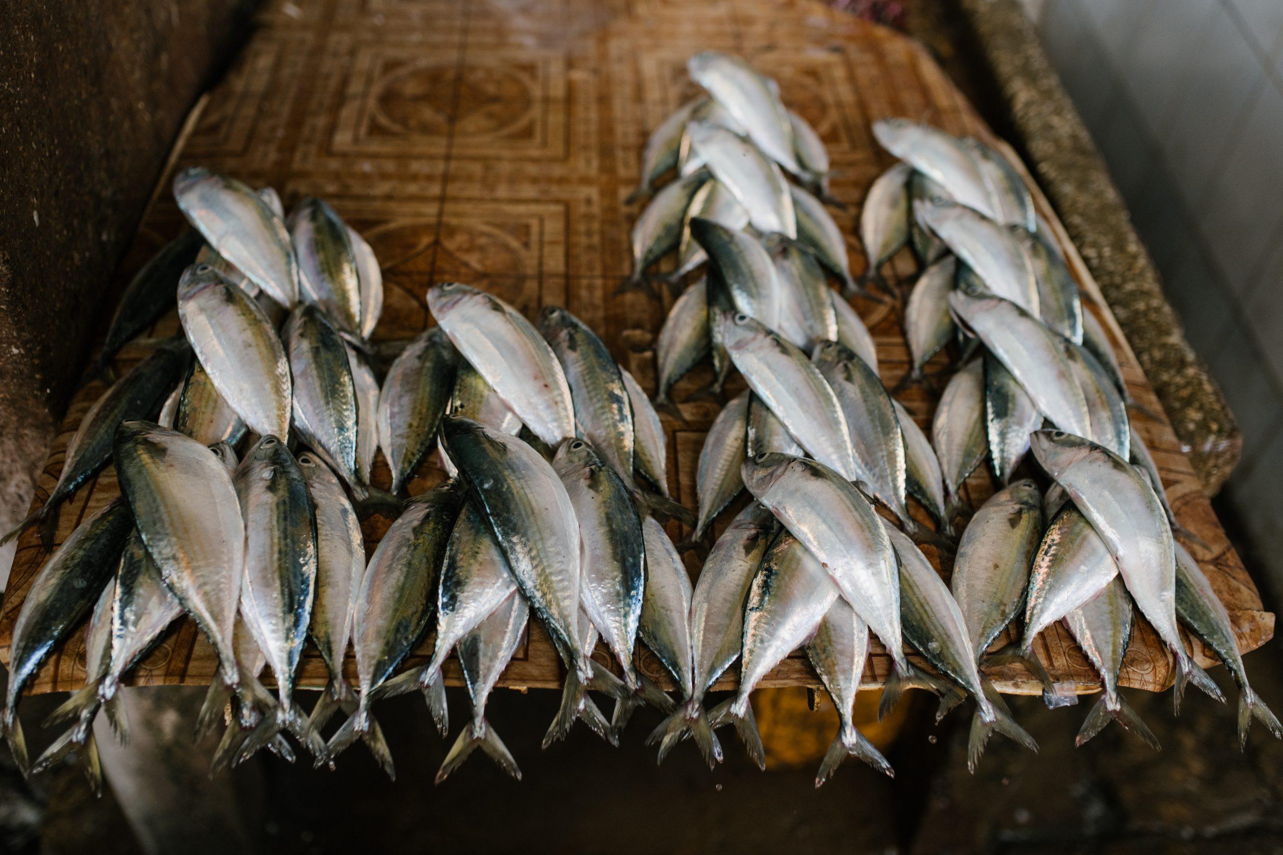 pescados en mercado